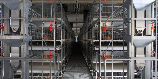 Broplus Broiler Cage System With Drawer