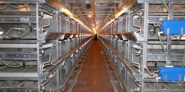 Unifor Rearing-Pullet Cages
