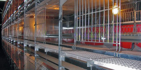 Residence Parent Stock Cages